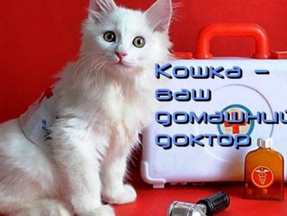 Лечебные свойства кошки
