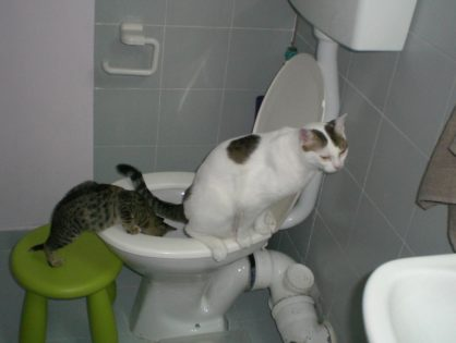 Как приучить кошку ходить на унитаз?