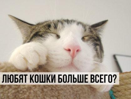 Что любит кошка