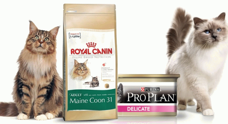 Классификация готовых кормов для кошек
