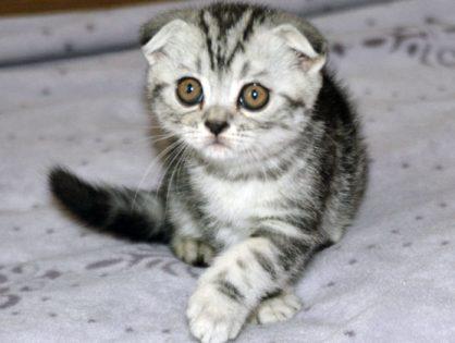 Индивидуальность кошки.
